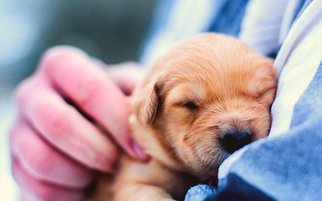 tareas auxiliar veterinario