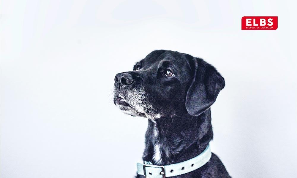 Comunicación canina: ¿Cómo se comunican los perros?