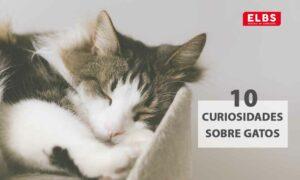 10 curiosidades sobre gatos que probablemente no sabías