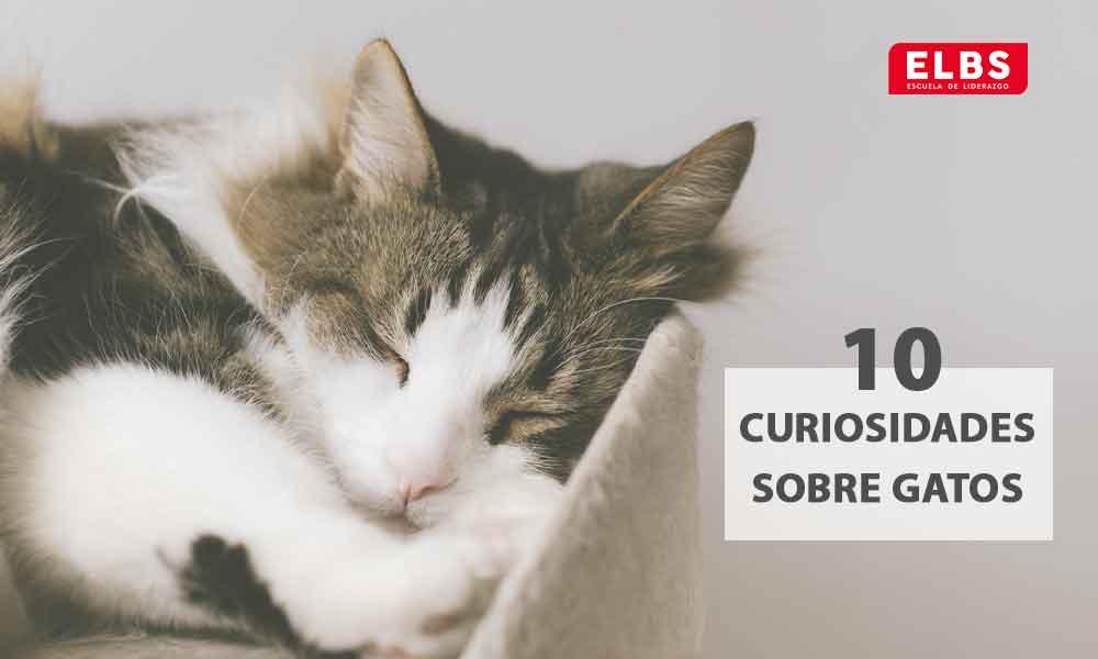 10 curiosidades sobre gatos que debes conocer