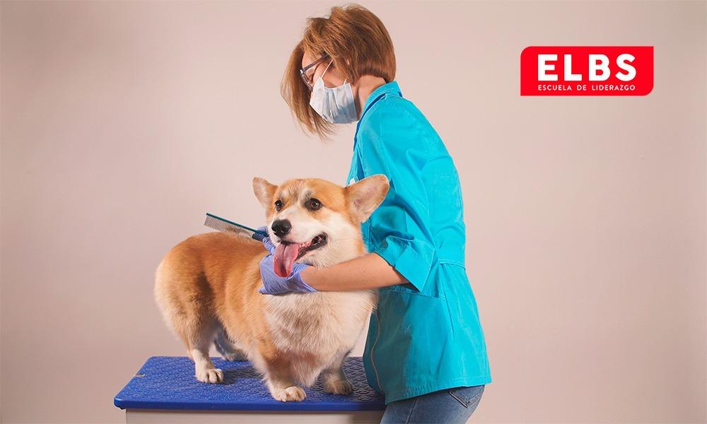 Estética canina: Tipos de cuidados para perros