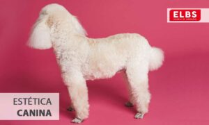 te contamos qué es la estética canina y resumimos su historia