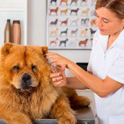 estudiar experto en Estética y Peluquería Canina