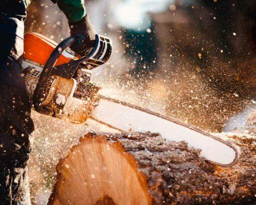 Estudiar Experto en Trabajador Forestal