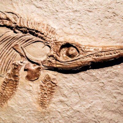 Máster Experto en Paleontología