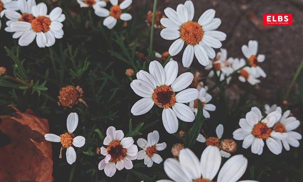 Bienvenida primavera: 10 plantas para el balcón