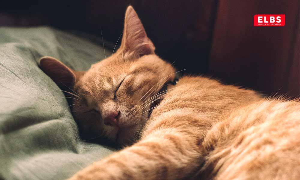 Sueño profundo y sueño ligero: combinación ideal